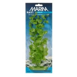 Plantas Aquascaper  MARINA - Cardamine 50 cm