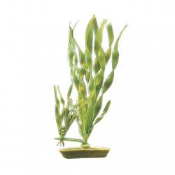 Plantas Aquascaper  MARINA - Valisneria 12,5 cm