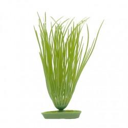 Plantas Aquascaper  MARINA - Elodea 12,5 cm