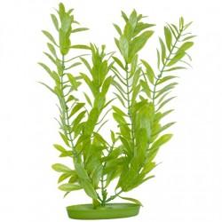 Plantas Aquascaper  MARINA - Hygropila 37,5 cm
