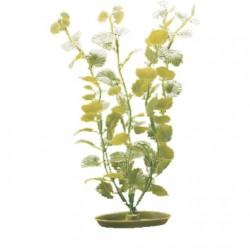 Plantas Aquascaper  MARINA - Maneywort 30 cm
