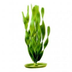 Plantas Aquascaper  MARINA - Valisneria G 30 cm