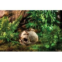 Refugios Fósiles EXO TERRA - Primate