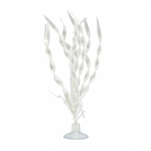 Plantas con Ventosa  MARINA 12,5 cm