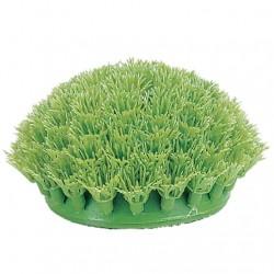 Plantas Plasticas Rootscaper  MARINA - ANUBIASENANA15cm