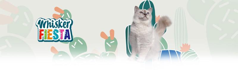 Colección Whisker Fiesta para gatos
