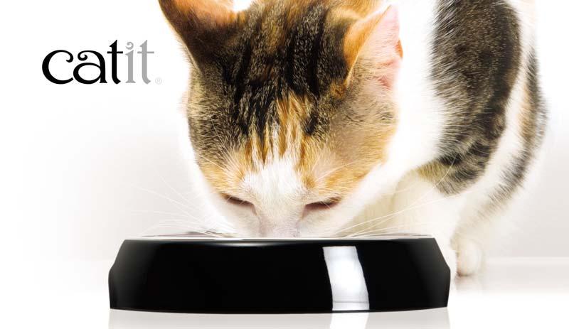 Comedero especialmente diseñado para gatos Catit