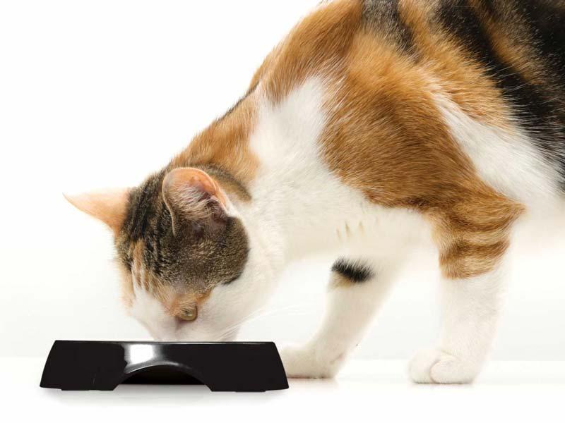 Comedero negro para gatos Catit