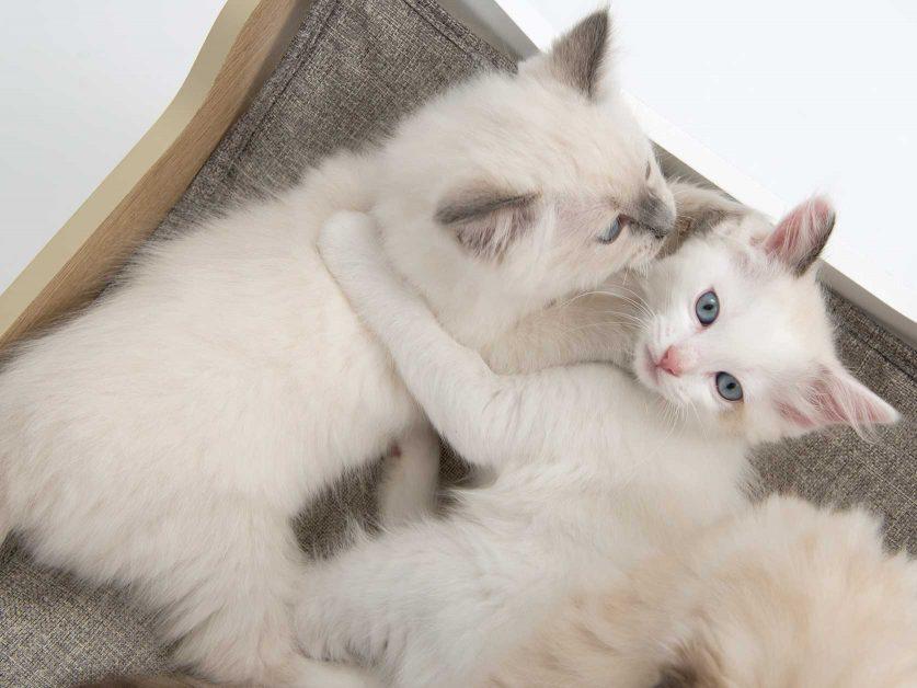 Mueble Vesper Cabana con hamaca con dos gatitos