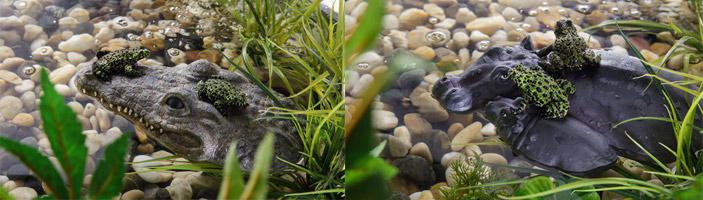 Islas flotantes para reptiles