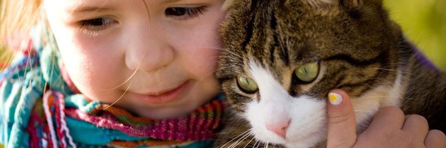 CATLove productos y accesorios para gatos