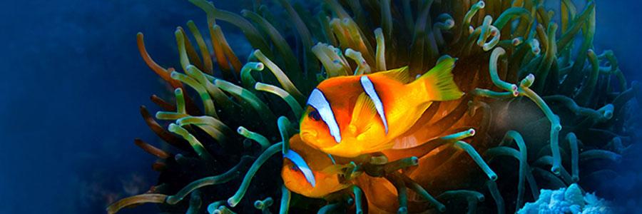 Fluval SEA, fabricantes de acuarios marinos y accesorios para agua salada