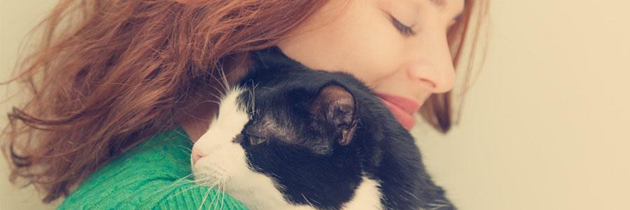 Catit, marca Hagen para gatos
