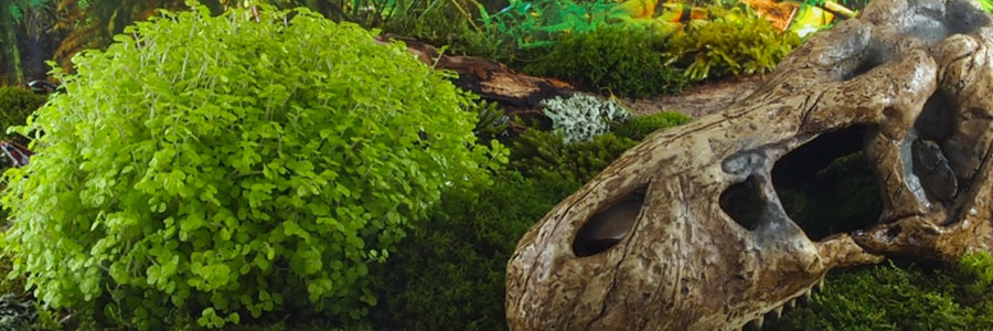 ExoTerra, marca Hagen para reptiles