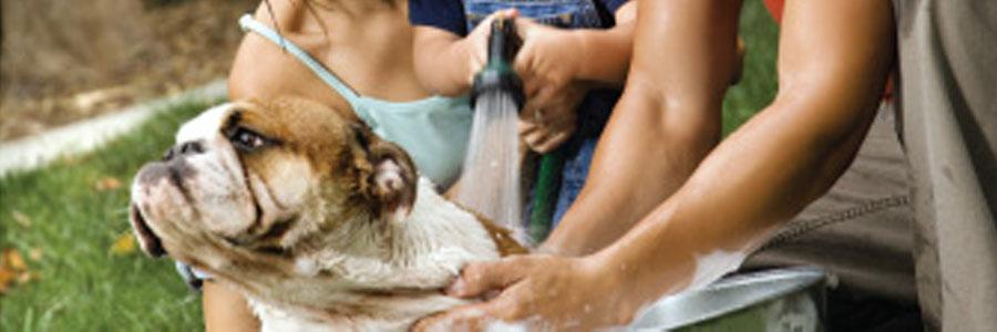Le Salon, fabricantes productos de belleza, peluquería y cuidado de nuestros animales