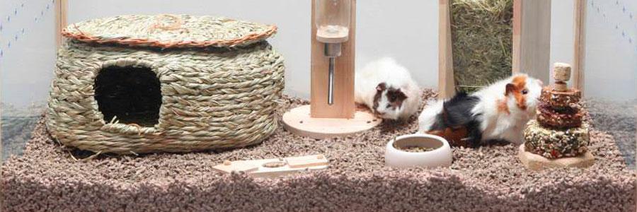 Living World Green, fabricantes de productos y accesorios ecológicos para roedores, conejos