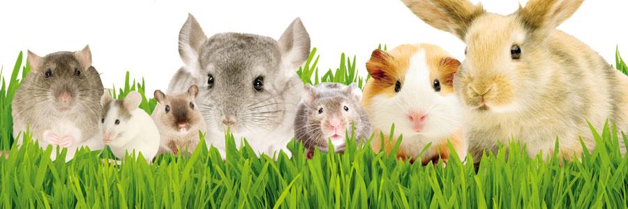 Living World, marca Hagen para roedores, conejos, hurones