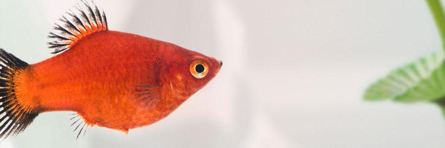 Marina, marca Hagen para acuariofilia