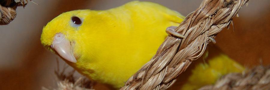 Prime, marca Hagen suplemento vitamínico para pájaros