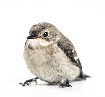pájaro sano solo