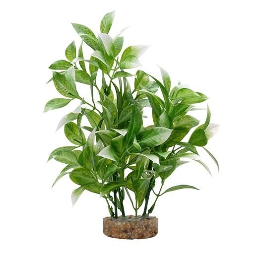 Fluval Plant Ludwigia Blanca,20cm