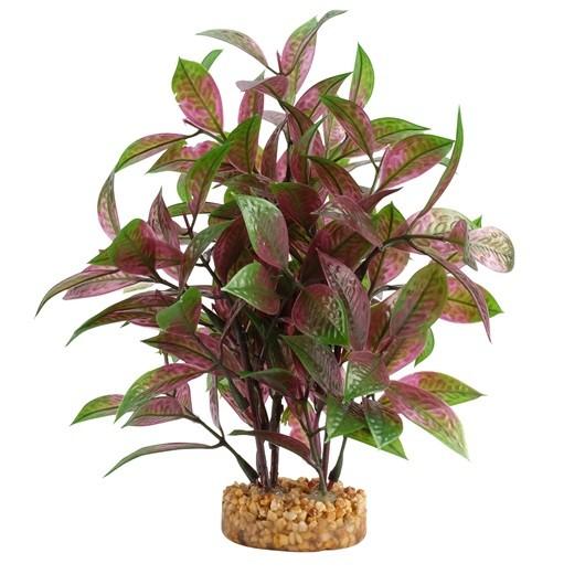 Fluval Plant Ludwigia Roja,20cm