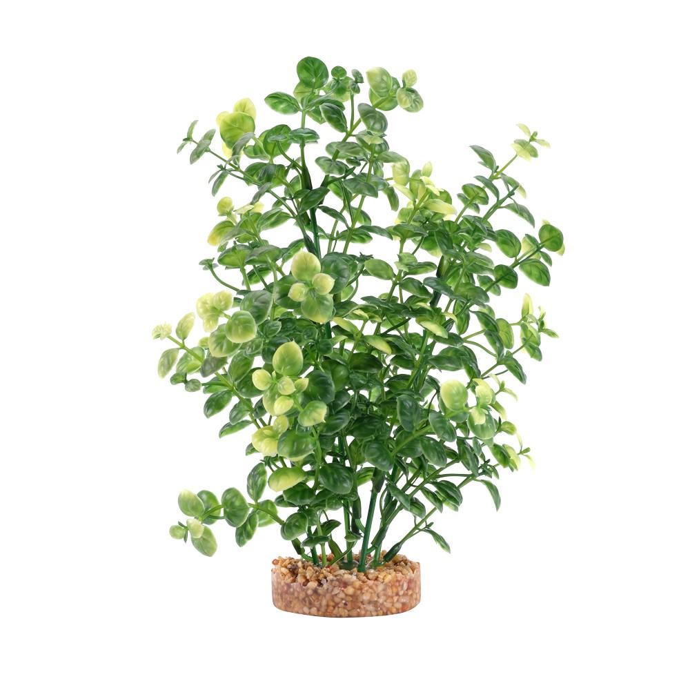Fluval Plant Bacopa Verde,20cm