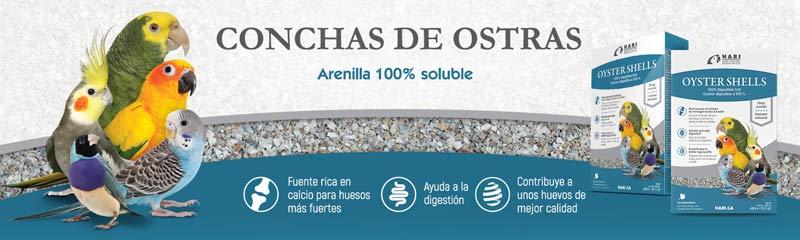 Conchas de ostras HARI