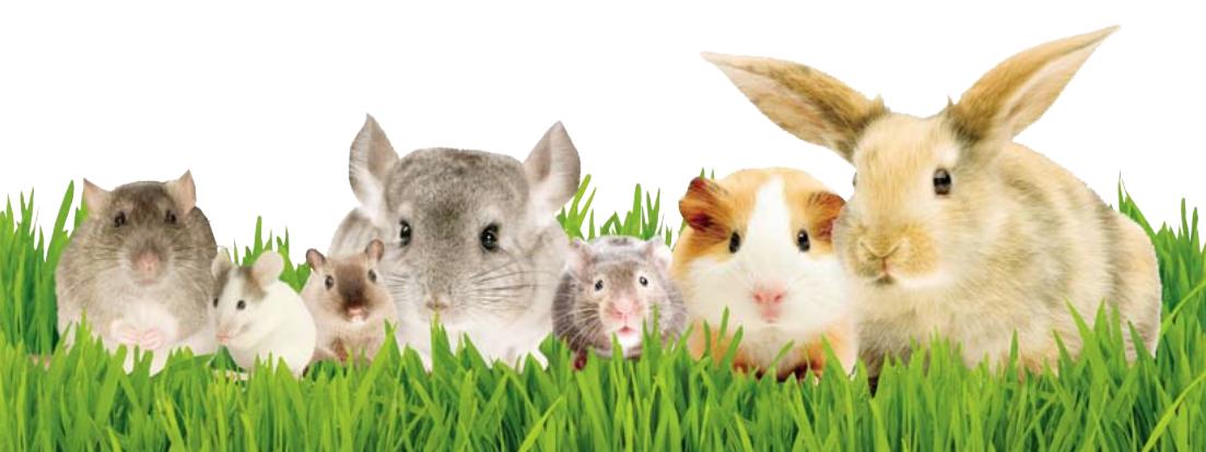 Fabricantes de productos para roedores tienda online de - Comida para ratones ...