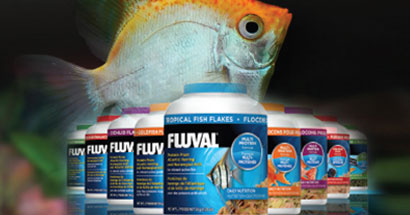 Nutrición avanzada para peces