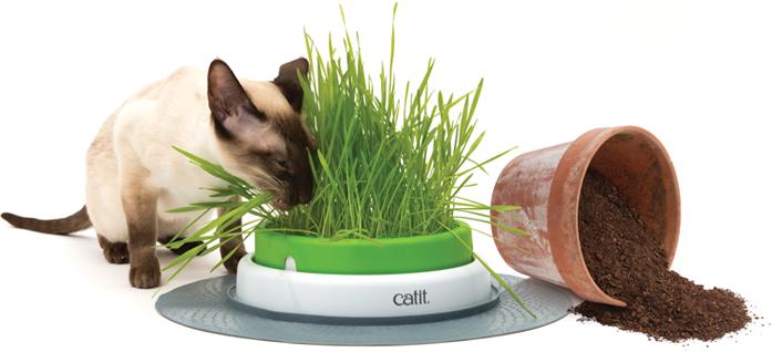 2.0 geminador hierba gatera para gatos