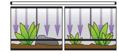 Los tamaños grandes pueden ocupar varios terrarios