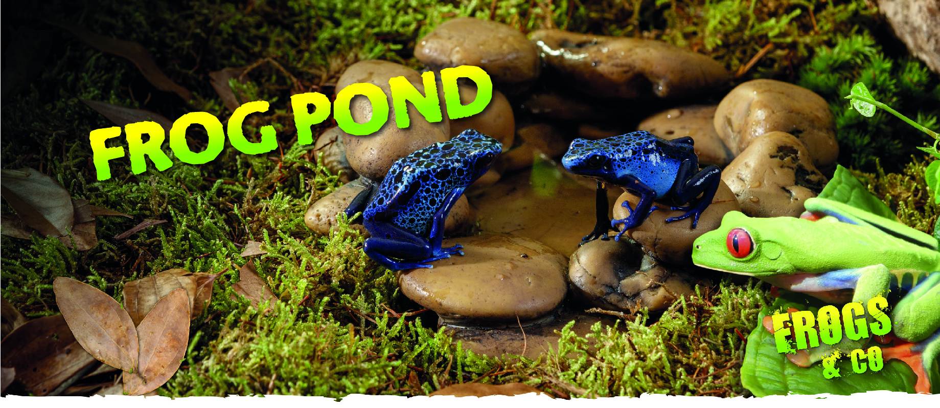 Bebedero de guijarros para ranas de Exo Terra